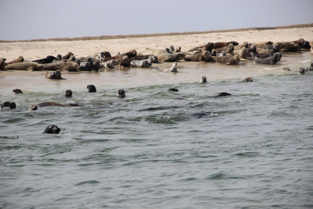 Seals Outermost Harbor